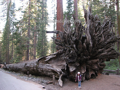 Mariposa Grove in Yosemite National Park