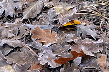 Mirror Lake in Yosemite National Park in Fall/Winter of 2012-2013 Frosted Leaves