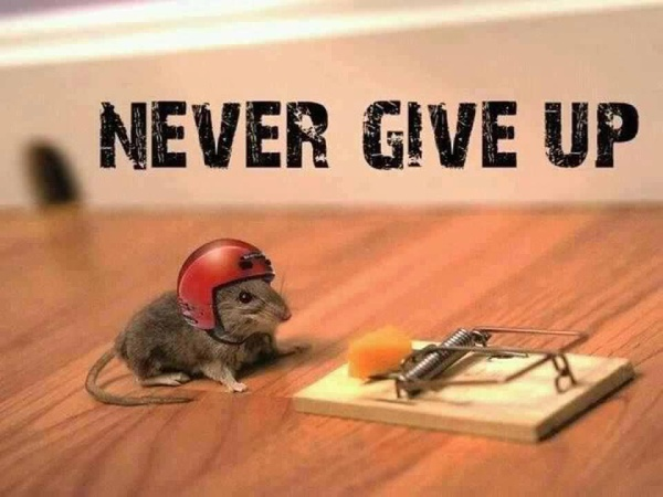 Never give up motivational monday quote with mouse and cheese.