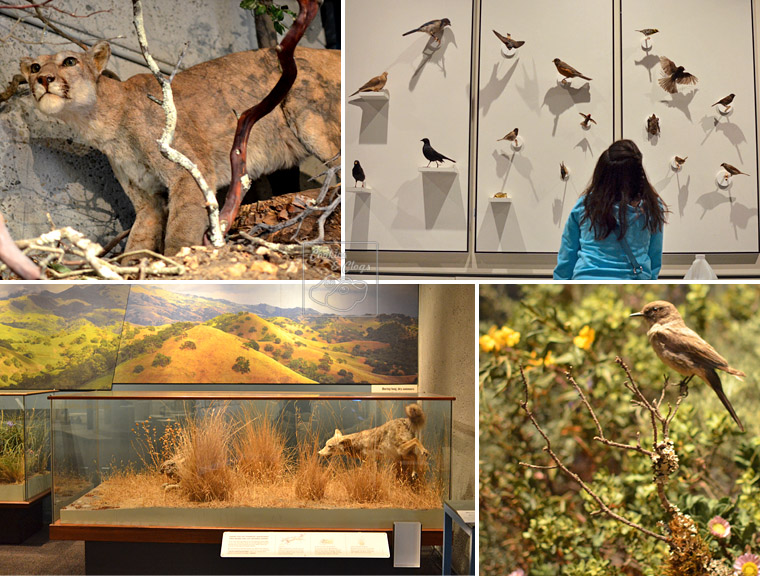 Oakland Museum Gallery of California Natural Sciences Re-Opening