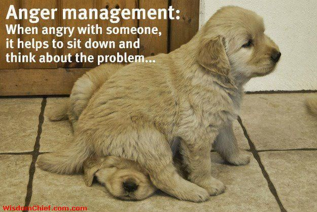 Quote About Life Anger Management w/ Puppies Sitting on Each Other #Quote