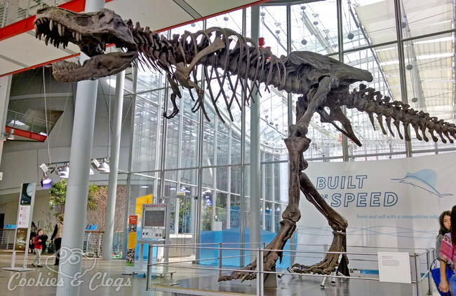 Dinosaur at California Academy of Sciences at Golden Gate Park in San Francisco, CA #SFBay