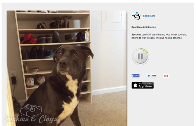 ocialCafe free photo app and social sharing app for audio with photo – Hungry puppy Speckles #dogs #tech