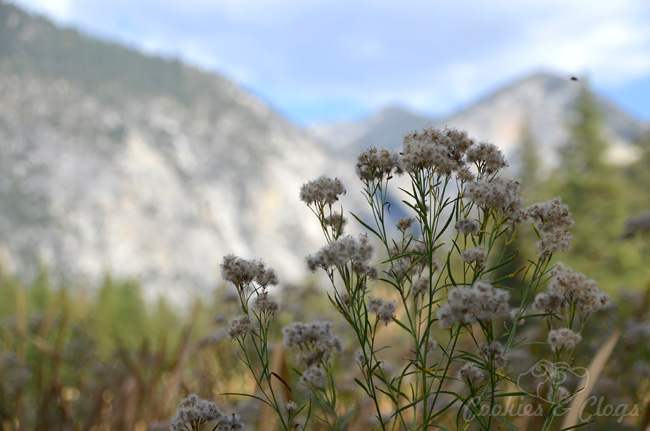 Kings Canyon National Park is in California. This nature photography was taken at Zumwalt Meadow.
