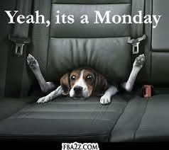 Life Quotes | Motivational Monday | Funny but cute Monday quote feat. adorable puppy in a car seat.