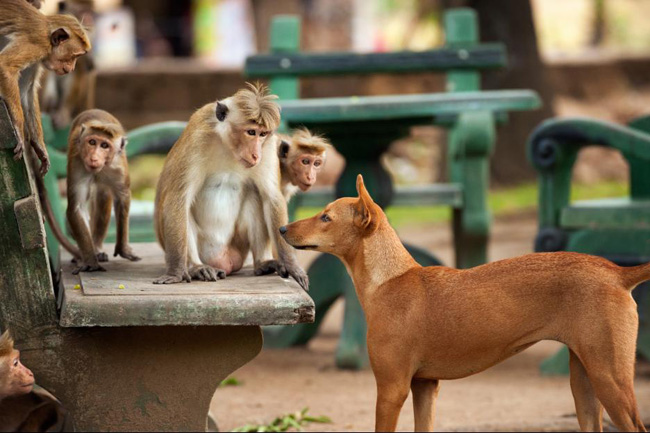Movies | Disneynature's Monkey Kingdom is now in theaters. Check out this Monkey Kingdom review to see if it's right for your family.