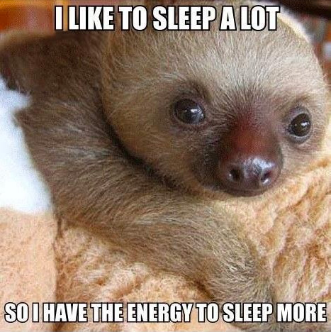 "Cute Quotes |Animals | If you love cute quotes about life, sleep, or adorable baby sloths, this is definitely a keeper! ""I like to sleep a lot so I have the energy to sleep more."""