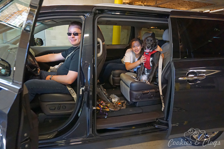 Cars | Travel | Family | See how the 2015 Kia Sedona handled a trip to the city, device loaded passengers, and dogs in this car review!