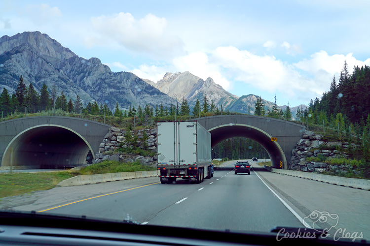Travel | Cars | To test out the new 2016 Ford Explorer Platinum, I drove from Kamloops to Banff to Calgary in Canada for the Platinum Adventure Tour. Follow #ExploreMore . Road trip