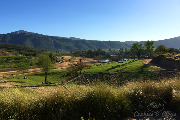 Nature Photography | Our last visit to San Diego Safari Park was amazing. We were able to capture some gorgeous and fun photos as the animals were extra active that day. The highlight was our ride on the Africa Tram tour. Overview from Africa tram