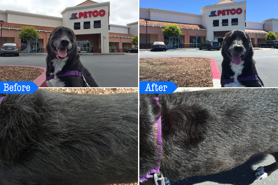 Cookies & Clogs | Dogs | Pets | See how to take the stress out of dog grooming and your next dog bath using Petco Grooming. Before and after photos of the pet bath and dog grooming services
