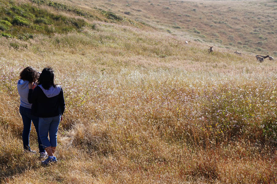 Cookies & Clogs | Want to take a family road trip to Point Reyes National Seashore in Point Reyes, CA? Here are several things to do with the kids including the Point Reyes Lighthouse. See what the climb down is like and if it's worth the trek. Viewing the wild Tule Elk reserve