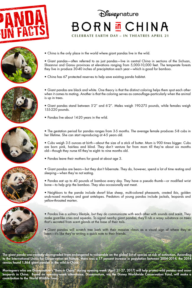 Cookies & Clogs | Born in China Printable Fun Facts and baby panda video clip.