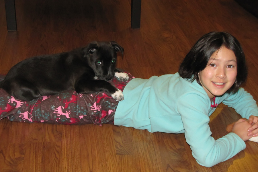 How to Care for a Senior Dog healthcare and wellness - mixed asian girl with puppy on legs