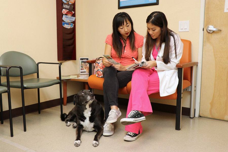 How to Care for a Senior Dog healthcare and wellness - VCA CareClub details with vet