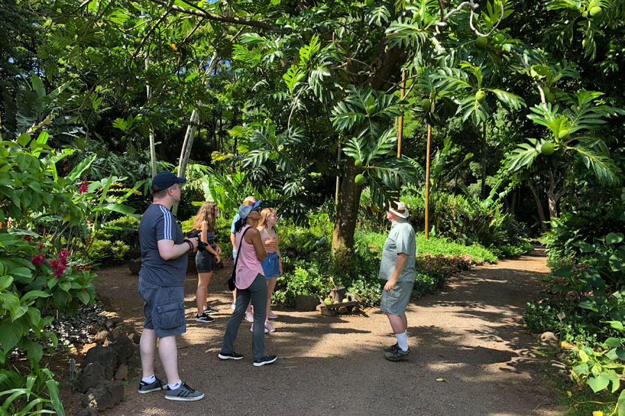 Taking the Allerton Garden Tour in Lawai Valley on the South Shore. 1 of 3 National Tropical Botanical Gardens in Kauai Hawaii. Breadfruit