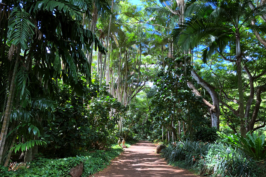 Taking the Allerton Garden Tour in Lawai Valley on the South Shore. 1 of 3 National Tropical Botanical Gardens in Kauai Hawaii.