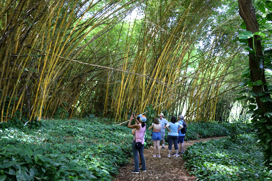 Taking the Allerton Garden Tour in Lawai Valley on the South Shore. 1 of 3 National Tropical Botanical Gardens in Kauai Hawaii. Bamboo room