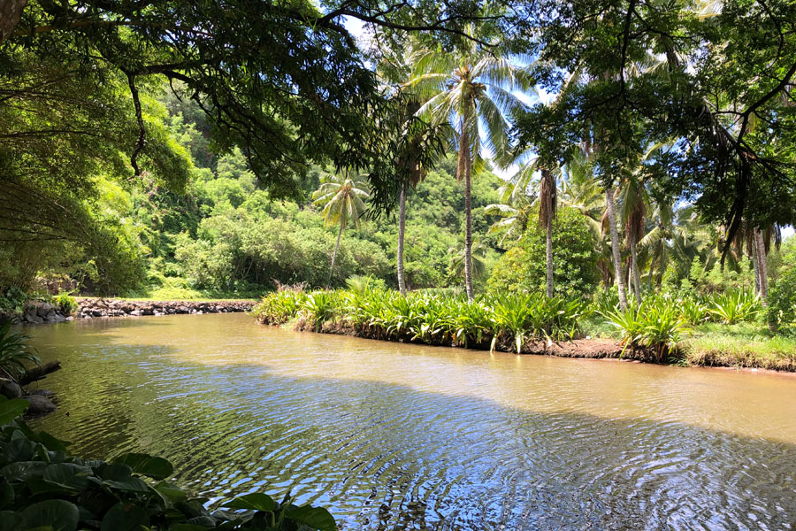 Taking the Allerton Garden Tour in Lawai Valley on the South Shore. 1 of 3 National Tropical Botanical Gardens in Kauai Hawaii. Lawai stream as shown in Jurassic Park