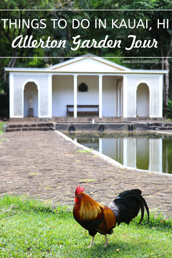 Taking the Allerton Garden Tour in Lawai Valley on the South Shore. 1 of 3 National Tropical Botanical Gardens in Kauai Hawaii. Rooster