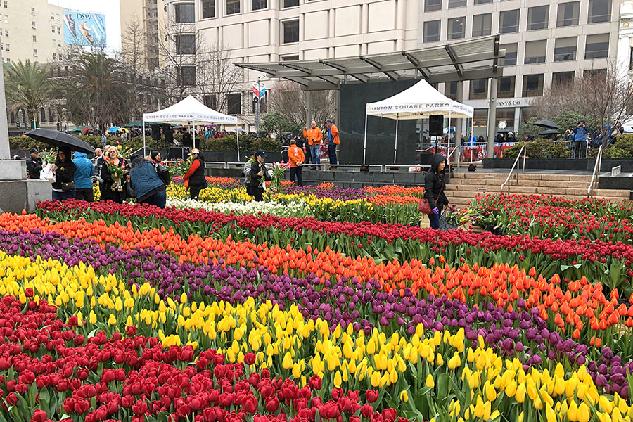 2020 Flower Bulb Day in San Francisco on March 7th! at Union Square in San Francisco on March 7. Photo from 2019 free tulips event