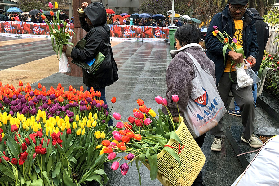 2020 Flower Bulb Day in San Francisco on March 7th! at Union Square in San Francisco on March 7. Photo from 2019 free tulips event do not bring your own basket